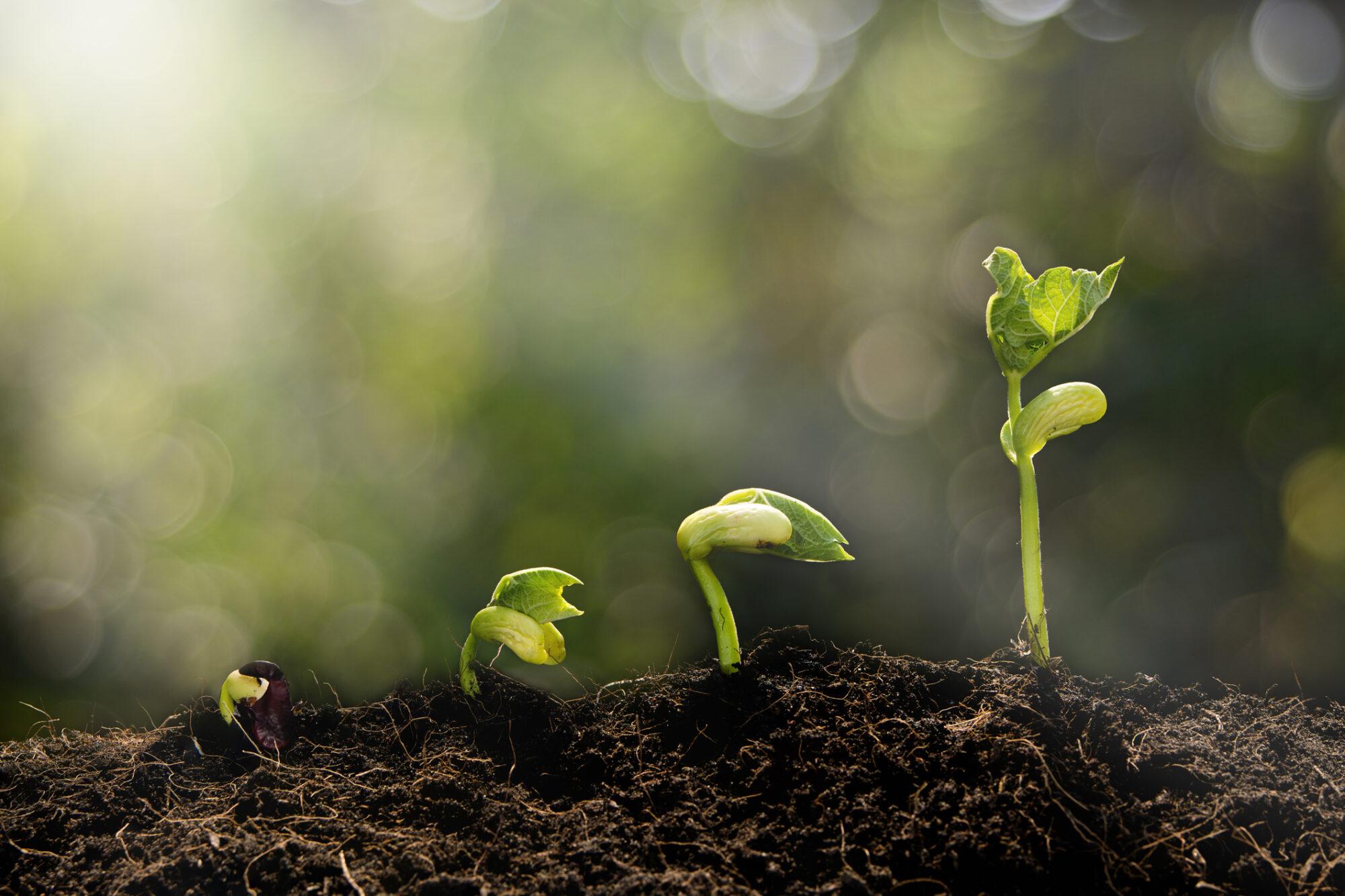 Bosques sostenibles en la imprenta ecológica