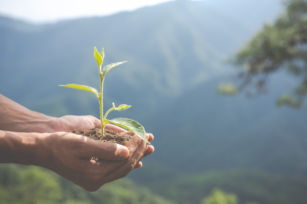 Certificado forestal para empresas